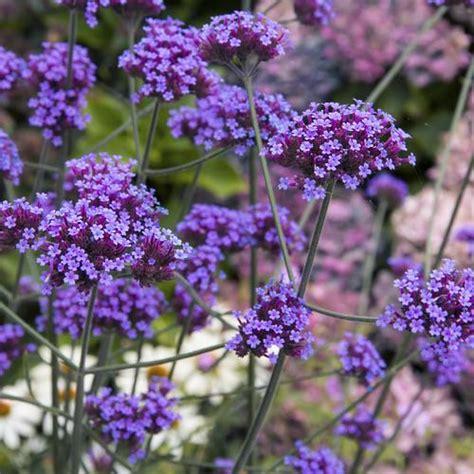 quelles fleurs planter en juin