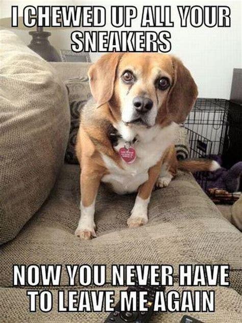 Beagle Memes - dog meme dog memes pinterest