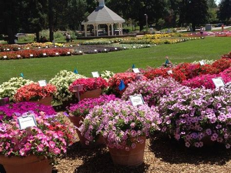 annual colorado state flower trial gardens