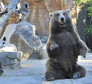 Sitting Bear by AustriaAngloAlliance on DeviantArt