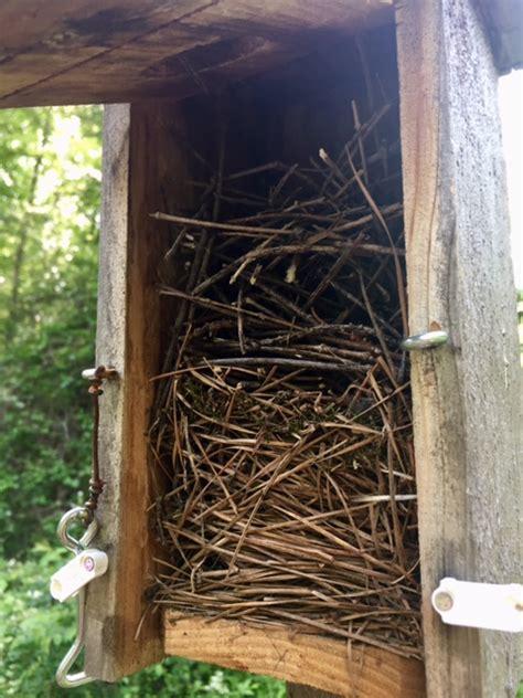 sgg bluebird box update april   smith gilbert gardens