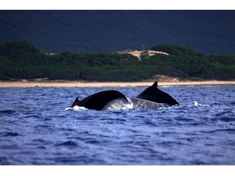 Catamaran Journey Hawaii by Na Pali Coast Morning Snorkel Cruise From Kikiaola Harbor