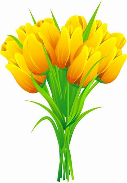 Tulips Tulip Clip Yellow Clipart Flower Daffodils