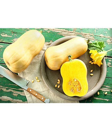 butternut kürbis pflanzen butternut k 252 rbis pflanze dehner