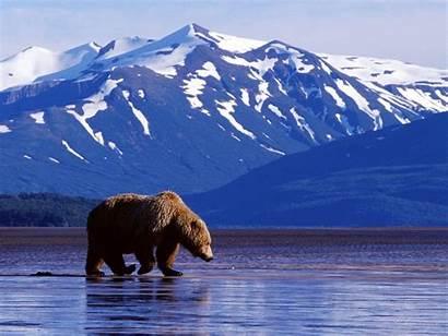 Alaska Wallpapers Desktop Background Alaskan Anchorage Bear