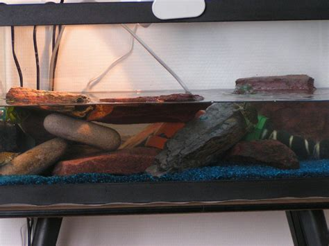 aquarium pour tortue de floride