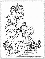 Corn Coloring Pages Wheat Printable Thanksgiving Picking Cornfield Sheets Candy Drawing Fruit Colouring Sheet Plant Cob Cute Maiz Getcolorings Vegetables sketch template