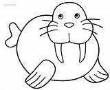Walrus Coloring Pages Printable Preschool Drawing Clipart Animals Clip Arctic Outline Craft Polar Cool2bkids Print Animal Crafts Children Sea Ocean sketch template