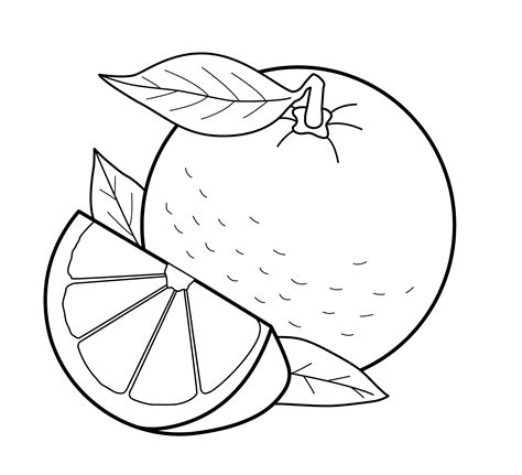 Coloring Oranges by Free Printable Fruit Coloring Pages For