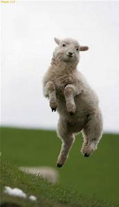 A happy sheep - Animals Funny Pictures - funiacs.com
