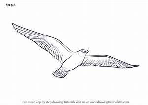 Learn How To Draw A Flying Bird Birds Step By Step