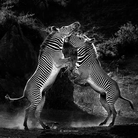 Splendid Wild Animals Photos By Marina Cano