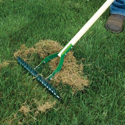 semina tappeto erboso rigenerare il prato speciali