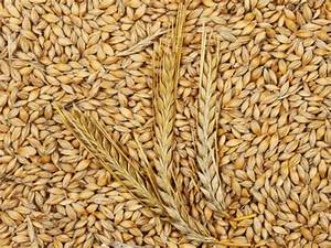 Diagram Of Barley
