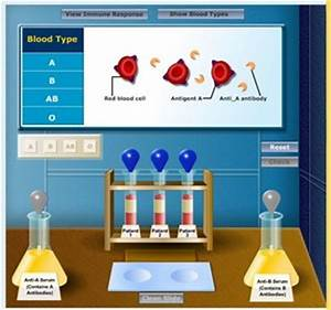 Types Of Rna Chart Virtual Labs Created By Glencoe