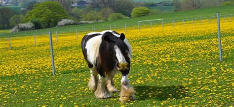 tierheilkundezentrum shop kraeuter pferd darmsanierung
