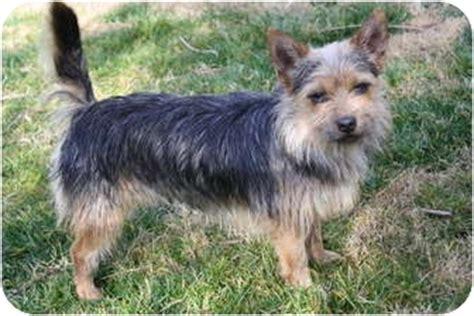 Baxter Adopted Dog In Canada Edmonton Ab