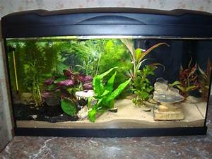 Aquarium Einrichten 60l : aquarium 60l d butant page 3 ~ Michelbontemps.com Haus und Dekorationen