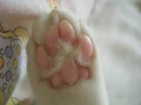 cats paw cat paws by halloweenlady on deviantart
