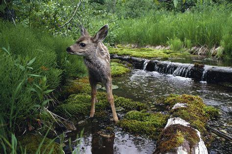 วอลเปเปอร์ : ธรรมชาติ, สัตว์ป่า, ถิ่นทุรกันดาร, ฟาง ...