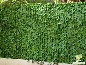 Haie Artificielle Pas Cher : haie artificielle v g tale feuilles de lierre 3 m ~ Edinachiropracticcenter.com Idées de Décoration