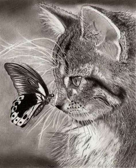 cute cat drawings showcase hative
