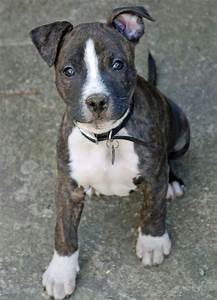 Terrier pitbull mix, I want and I want you on Pinterest