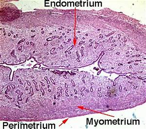 Histology Pictures