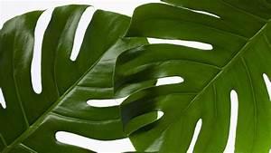 Free, Photo, Green, Leaf, Plant, -, Botanic, Growth, Texture, -, Free, Download