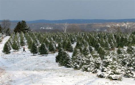 best christmas tree farm ri 64 best images about my hometown stratford ct on stratford town pizza and clams