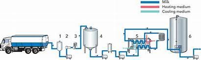 Cheese Milk Heat Processing Dairy Treatment Reception