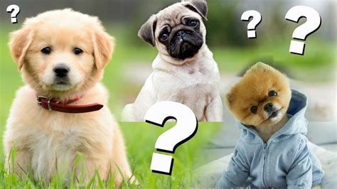 welchen geruch mö hunde nicht welchen geruch hassen hunde chihuahua kaufen welchen welpen soll ich kaufen hunde im test