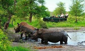 Motswari, Private, Game, Reserve, Timbavati, Game, Reserve