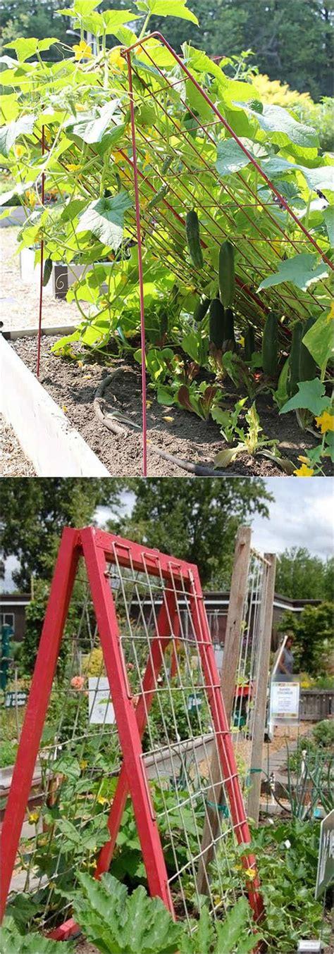 easy diy garden trellis ideas vertical growing