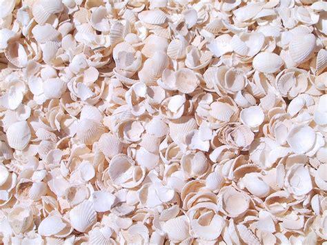 seashell color wikipedia