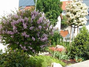 Flieder Im Kübel : zwerg duftflieder 39 palibin 39 syringa meyeri 39 palibin ~ Michelbontemps.com Haus und Dekorationen