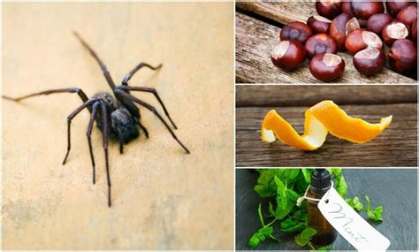 natural ways   spiders    home