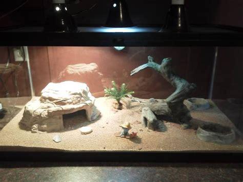 bearded dragon heat l wattage 40 gallon lizard tank for sale