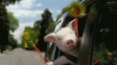 Pig Mario Geico Commercial Friday Giphy Gifs