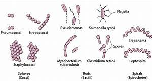 Overview Of Bacteria - Infections