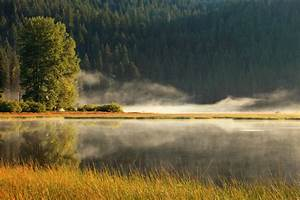 Free, Images, Landscape, Tree, Nature, Forest, Grass, Marsh, Wilderness, Mountain, Cloud, Fog