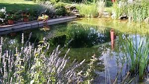 Construction Piscine Naturelle : le guide construire une piscine naturelle ~ Melissatoandfro.com Idées de Décoration