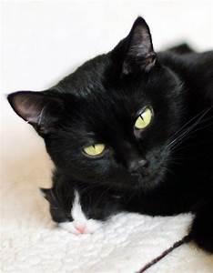 cute black rescue cat mama snuggling baby kitten ...