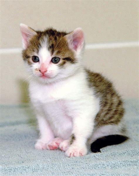 Cc, The First Cloned Cat Britannicacom