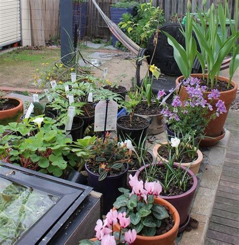 plants for facing gardens plants for a south facing garden gardendrum