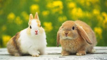 Rabbit Rabbits Animals Wallpapers Animal Bunnies Bunny