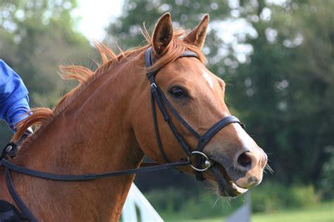 Sad Looking Horse