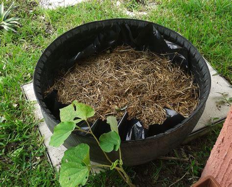 de llantas de llantas mis cultivos cultivo de hortalizas en llantas recicladas con cama de compost y paja mi huerto