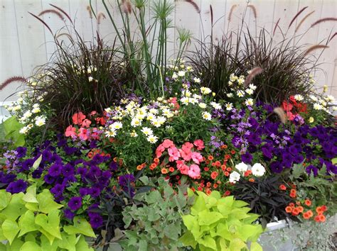 shade annuals row your way to color with annuals carolyn s shade gardens