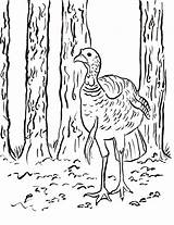 Hunting Coloring Turkey Wild Printable Colorings Reference Printables Samantha Getcolorings Getdrawings Crazy Popular Birds Samanthasbell sketch template